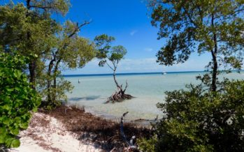 Le plus beau site naturel de Floride : le « backcountry » des Lower Keys