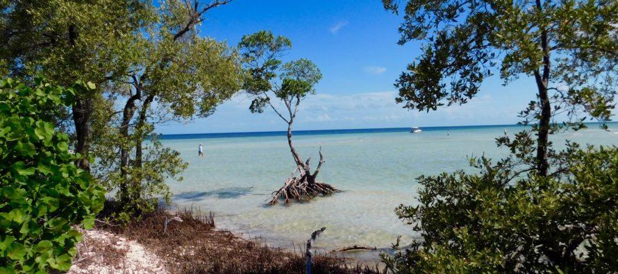 Le plus beau site naturel de Floride : le «backcountry» des Lower Keys