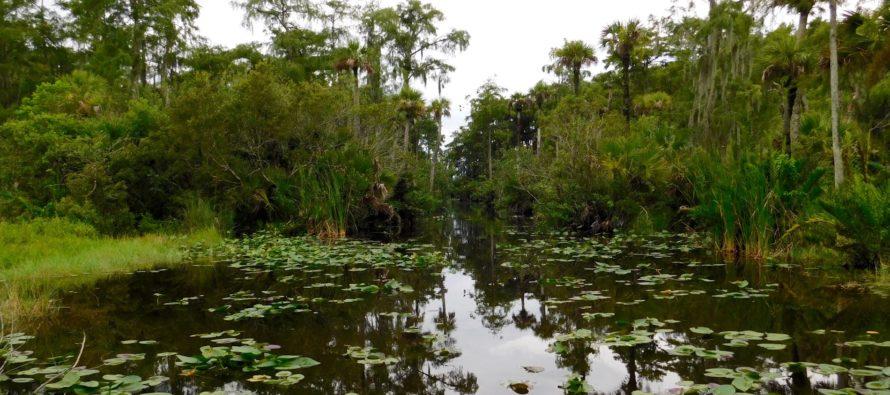 Un réservoir à 1 milliard de dollars pour nettoyer les Everglades