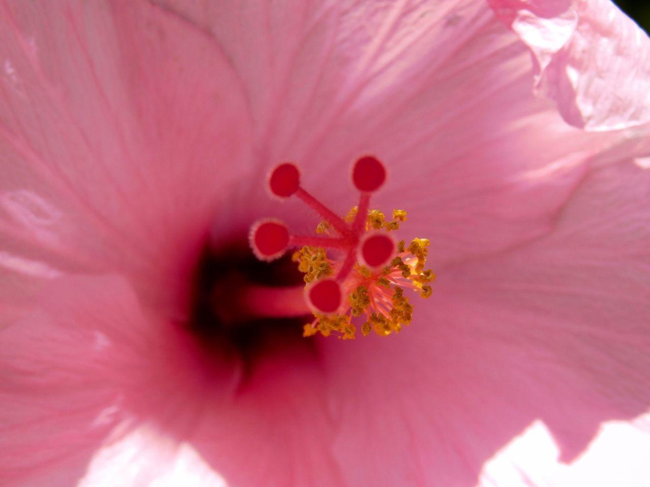 Butterfly world coconut creek broward floride 6877 le for Chambre de commerce quebec floride