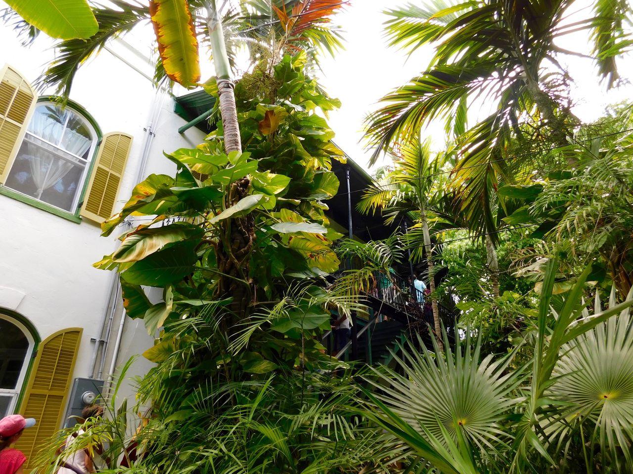 Hemingway House Key West 4873 Le Courrier De Floride