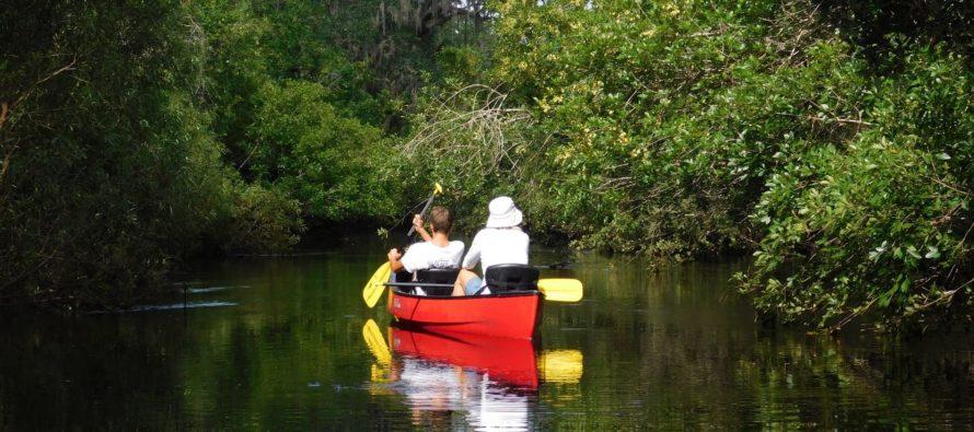 Little Manatee River en canoë-kayak : une magnifique descente (entre Tampa et Bradenton)