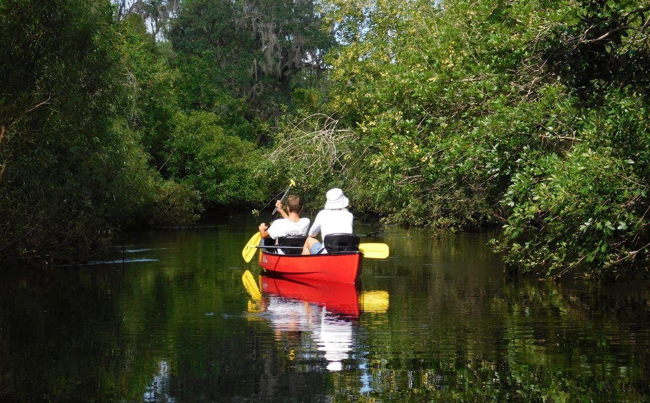 Photo of Little Manatee River en canoë-kayak : une magnifique descente (entre Tampa et Bradenton)