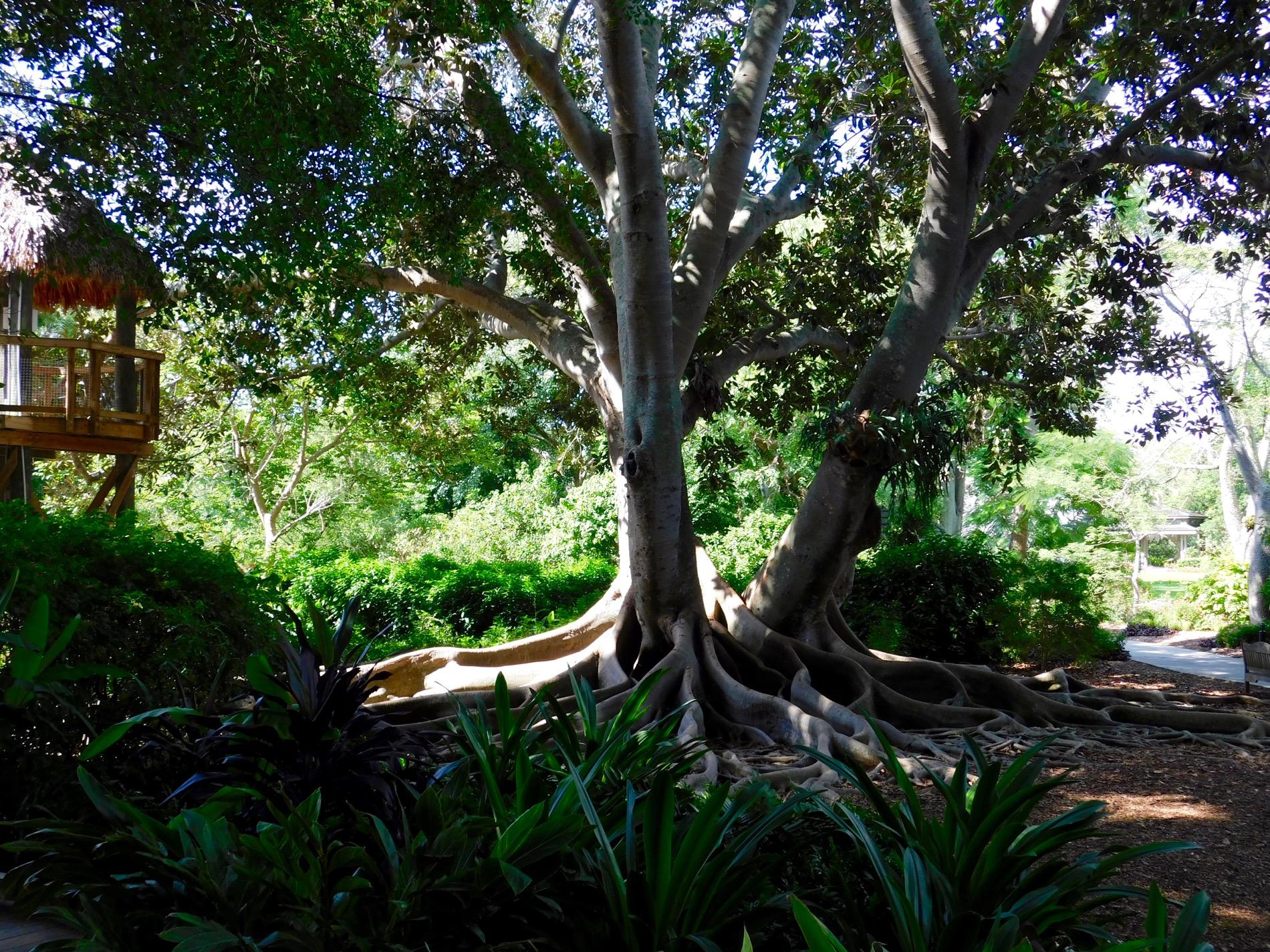 Mary Selby Botanical Gardens Sarasota 7797 Le Courrier