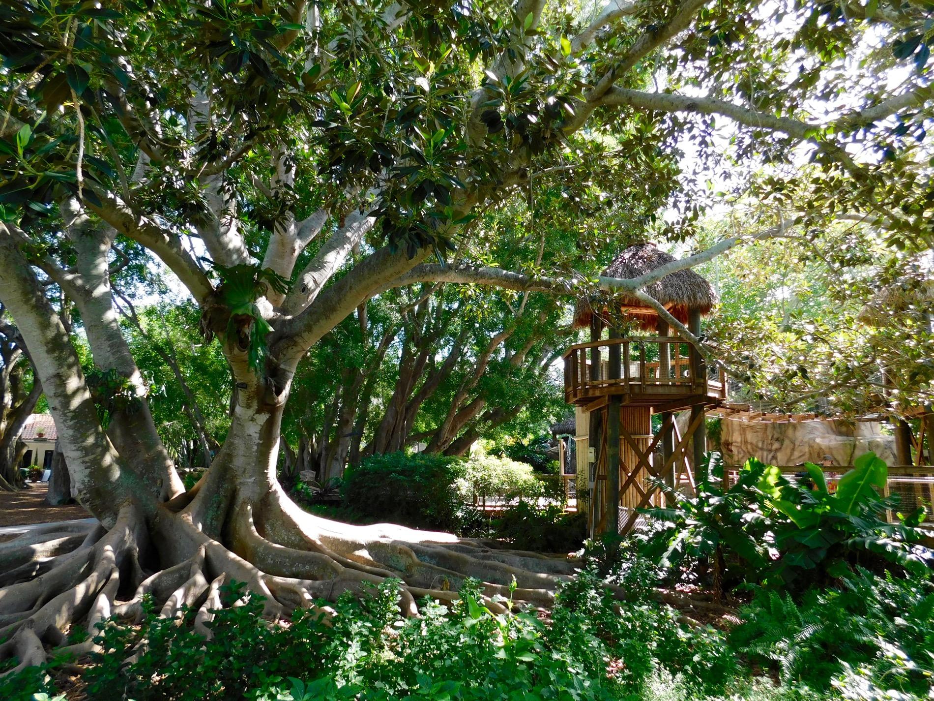 Mary Selby Botanical Gardens Sarasota 7822 Le Courrier