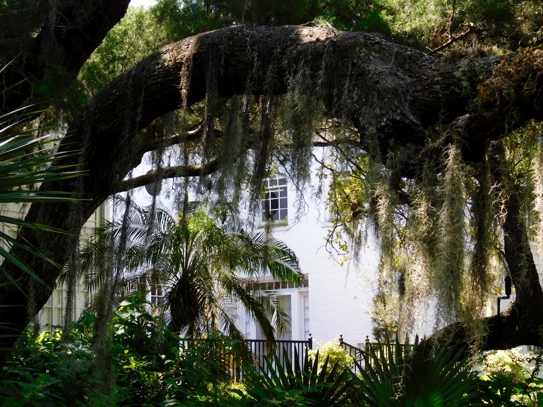 Mary Selby Botanical Gardens Sarasota 7890 Le Courrier