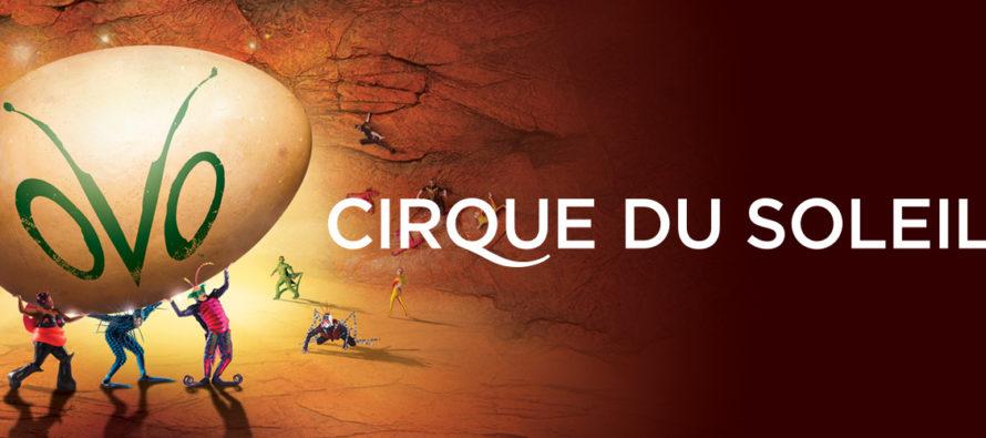 Le Cirque du Soleil vient présenter «Ovo» à Miami et Sunrise en juillet !