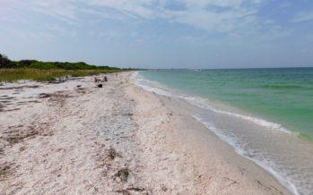 Cayo Costa : l'île sauvage aux coquillages (près de Fort Myers en Floride)