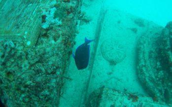 Neptune Memorial Reef : un cimetière sous-marin à Key Biscayne en Floride