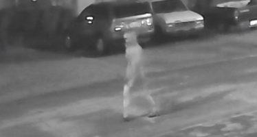 Quatrième meurtre à Tampa : la psychose du tueur en série s'installe
