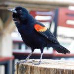 Oiseau sur l'île d'Islamorada dans l'archipel des Keys de Floride
