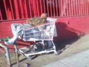 L'Amérique homeless : de plus en plus de sans-abris aux USA. Etat des lieux.