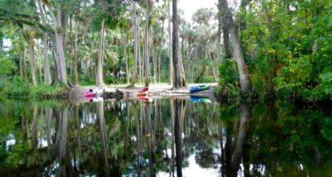 Loxahatchee River : la plus belle rivière du sud de la Floride
