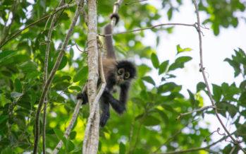 Parc de Punta Laguna : une immersion dans la nature près de Cobà (à la frontière du Q-Roo et du Yucatan)