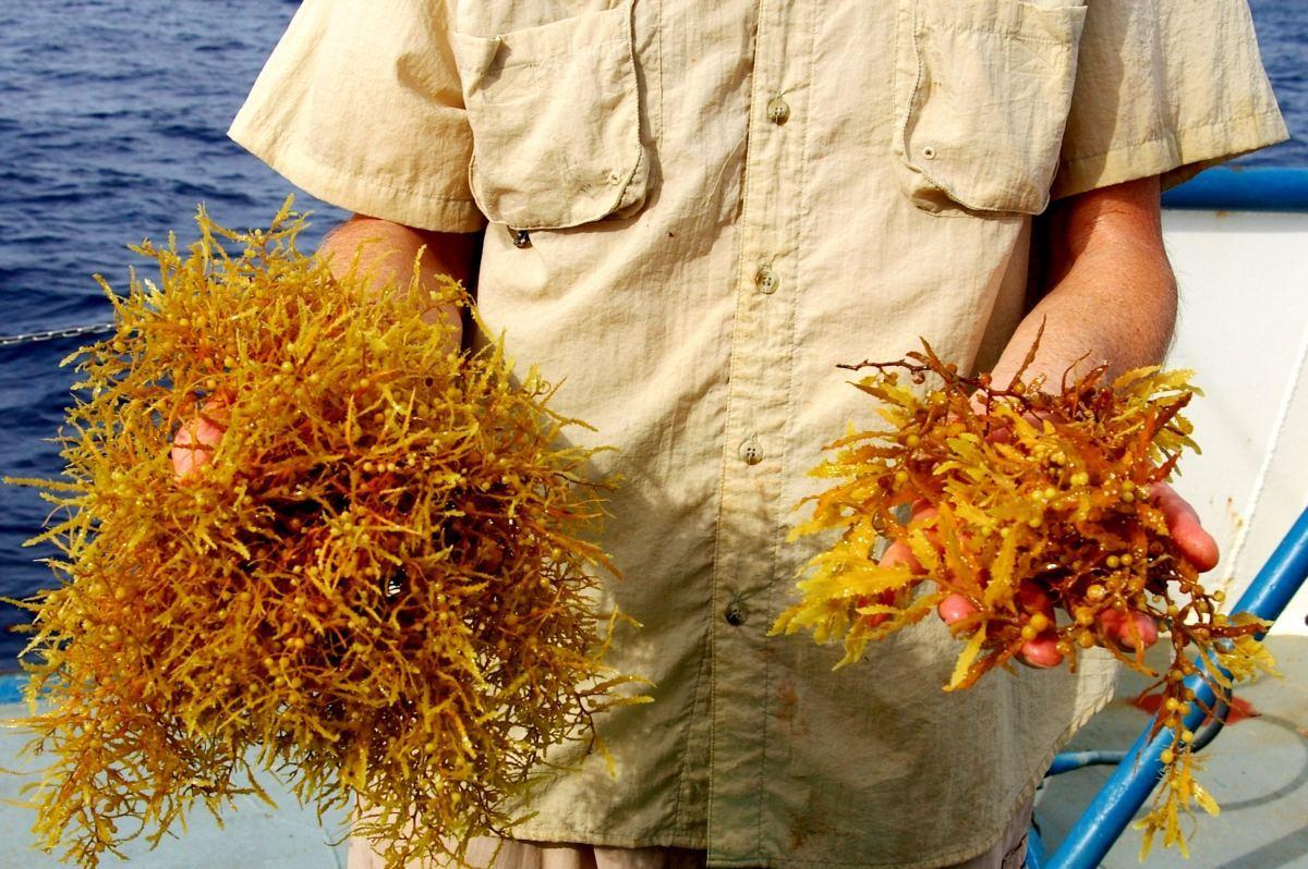 Photo of Marée rouge en Floride, sargasses à Miami et autres algues vertes qu'on peut éventuellement trouver en Floride