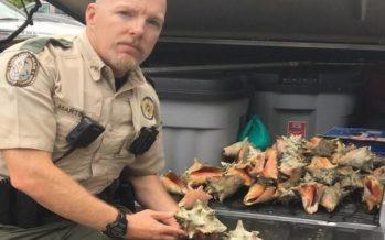 Key West : 15 jours de prison pour avoir ramassé des coquillages !