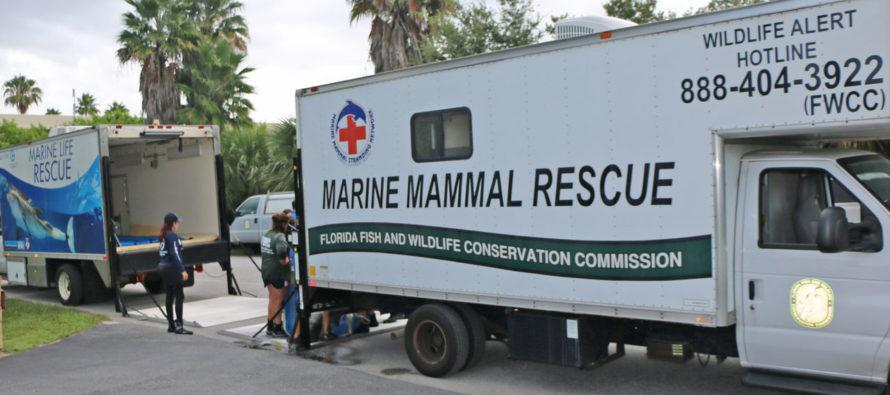Red Tide de Floride : le gouverneur a décrété l'état d'urgence contre la marée rouge