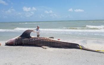 Floride : D'où vient la marée rouge qui rend la côte ouest infréquentable ?