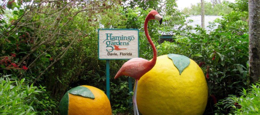 Flamingo Gardens de Davie : pour découvrir les plantes et animaux de Floride