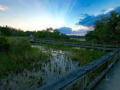 Tree Tops Park de Davie : pour les cavaliers et les amoureux de la nature !