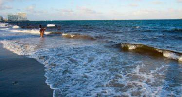 La marée rouge est toujours fortement présente sur la côte ouest de la Floride
