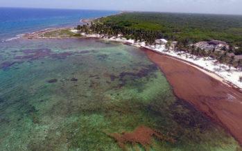 Les sargasses : un problème également inquiétant pour la Floride