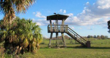 Loxahatchee Refuge : les Everglades à Boynton Beach (comté de Palm Beach)
