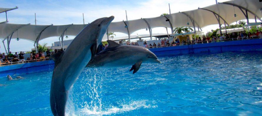 Miami Seaquarium : un aquarium avec des shows aquatiques époustouflants (dauphins, phoques…)