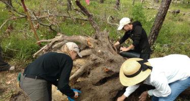L'ouragan Michael a (aussi) dévoilé le trésor enfoui d'esclaves en Floride