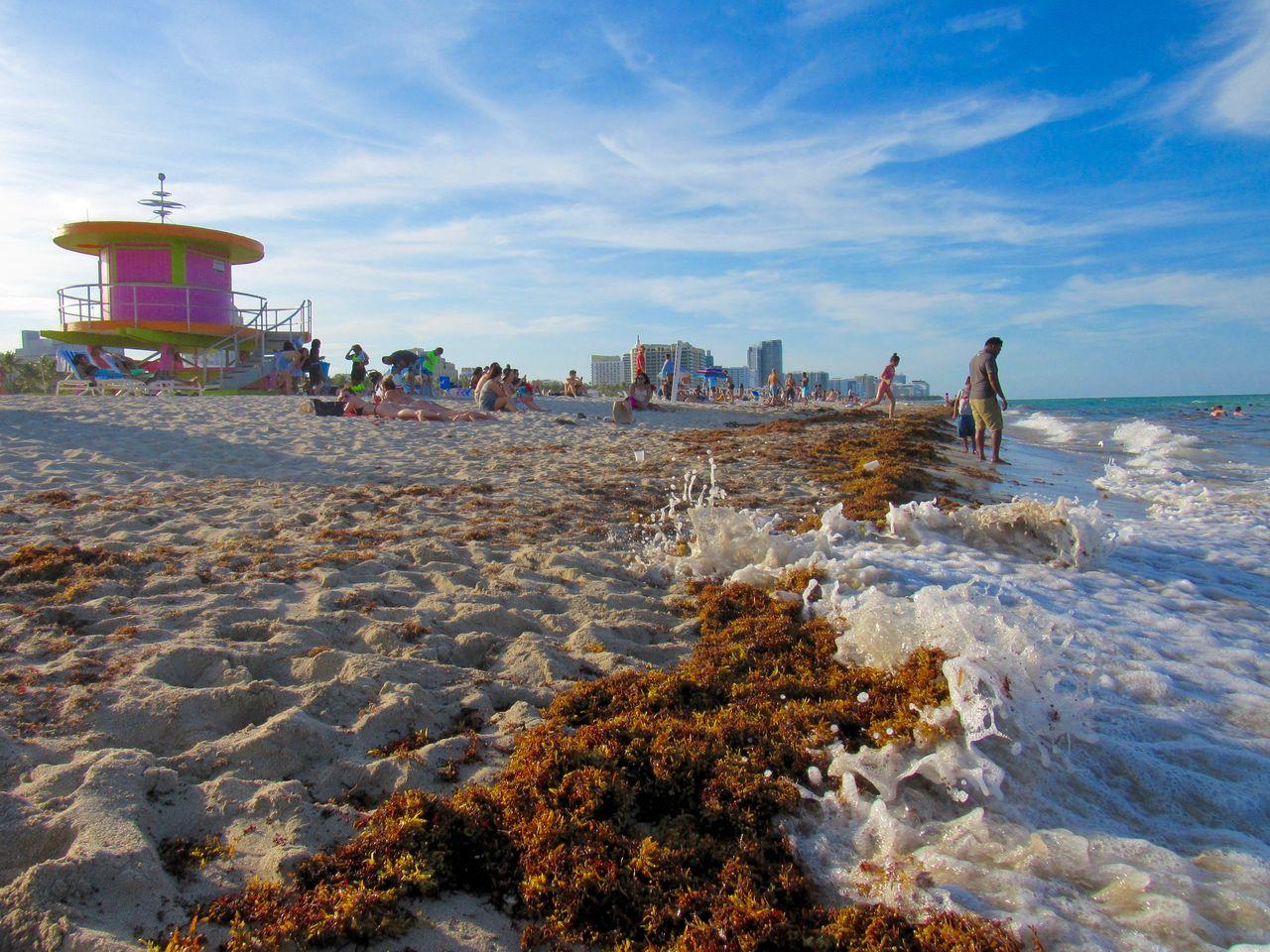 Photo of Infos sur la présence potentielle d'algues invasives à Miami et en Floride