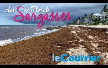 Arrivées massives d'algues sargasses dans la région de Miami/Palm-Beach (vidéo)